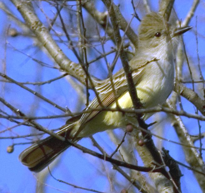 Birds New Mexico Identification