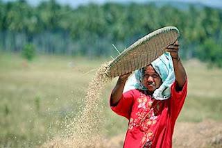 clima acabaria con arroz