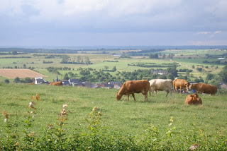 Vaade nr 1: lehmad maal