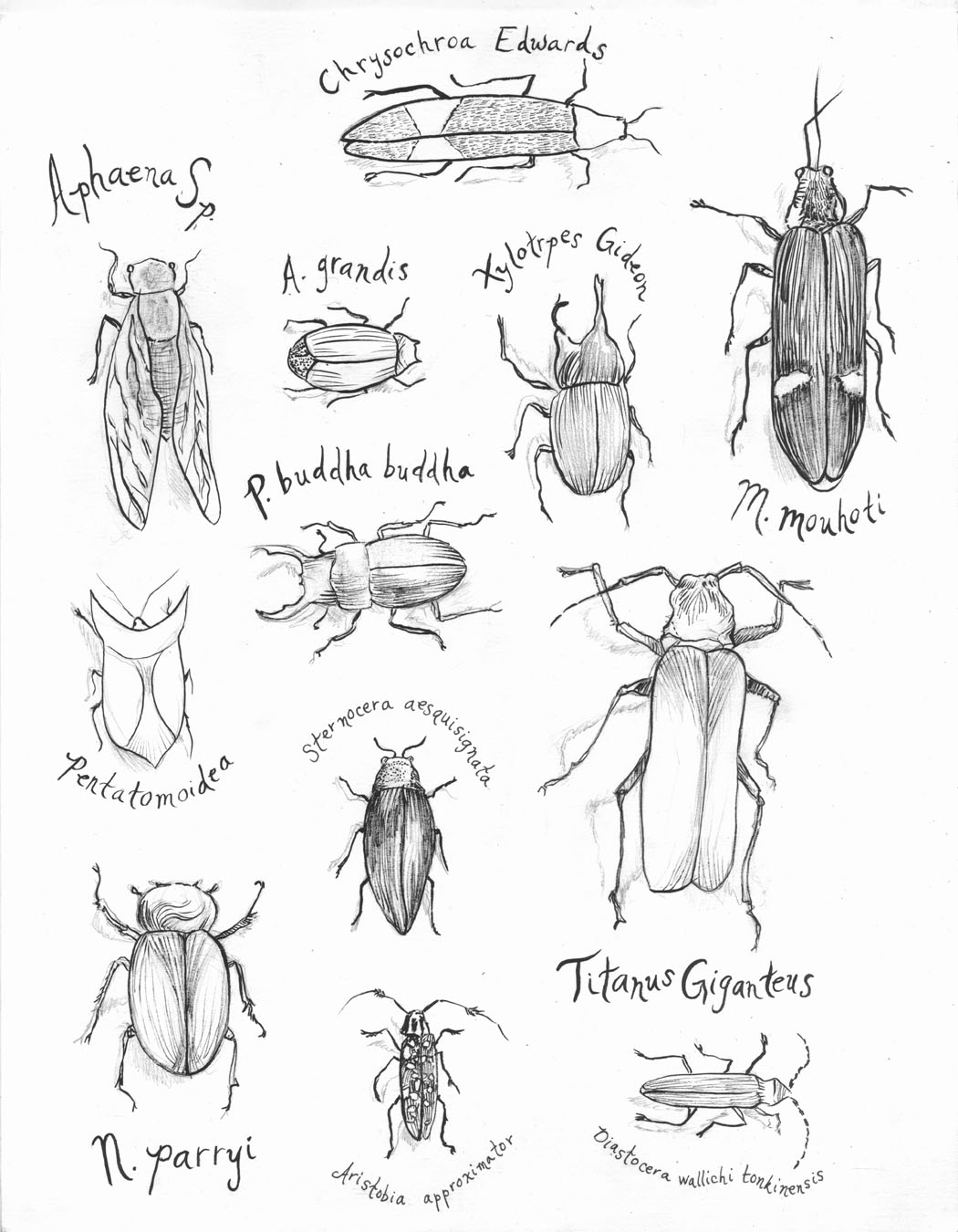 Jacqueline McNally: Some Nature Drawings.