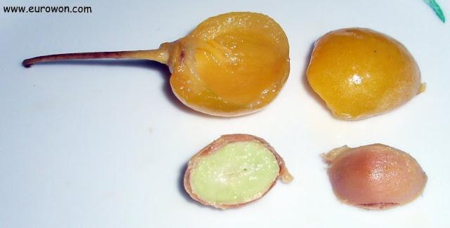 Fruto del ginkgo y nuez de ginkgo abiertas por la mitad