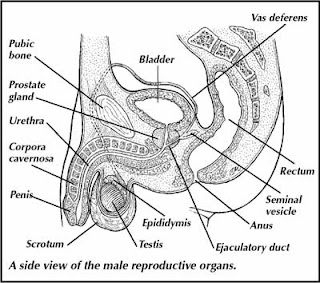 School Workz: Reproductive System