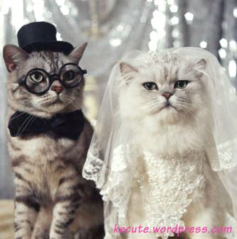 Hazard Cat Hazard Cat Editor is Getting Married