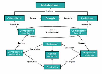 EDUCACIÓN VIRTUAL A TIEMPO REAL: METABOLISMO EN LA CELULA