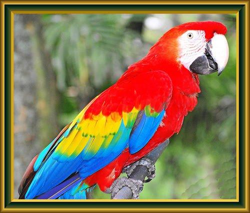 Mewarnai Gambar Sketsa Burung Kakak Tua Berwarna Terbaru ...