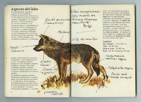 Elrectanguloenlamano Félix Rodríguez De La Fuente Un Ser Humano Excepcional Y Naturalista De Talla Mundial