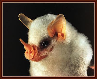 bat2B2