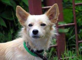 Choosing a dog breed: September 2008