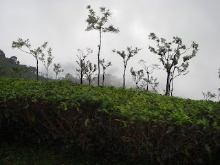 Ooty Hill Station - Ooty Places to Visit