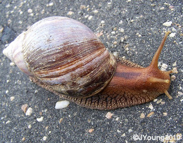 South African Photographs: Snails - Part 2