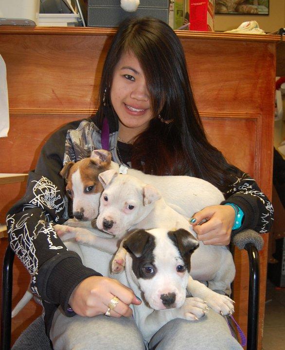 Sean Casey Animal Rescue Dogs