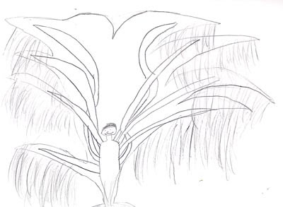 Luciérnaga: La Galería. Árboles