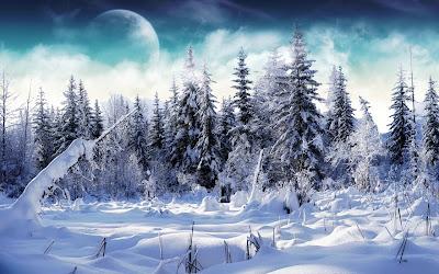 Winter landschap met dennebomen