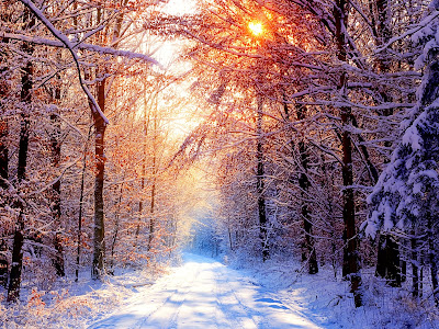 Pad in bos bedekt met sneeuw