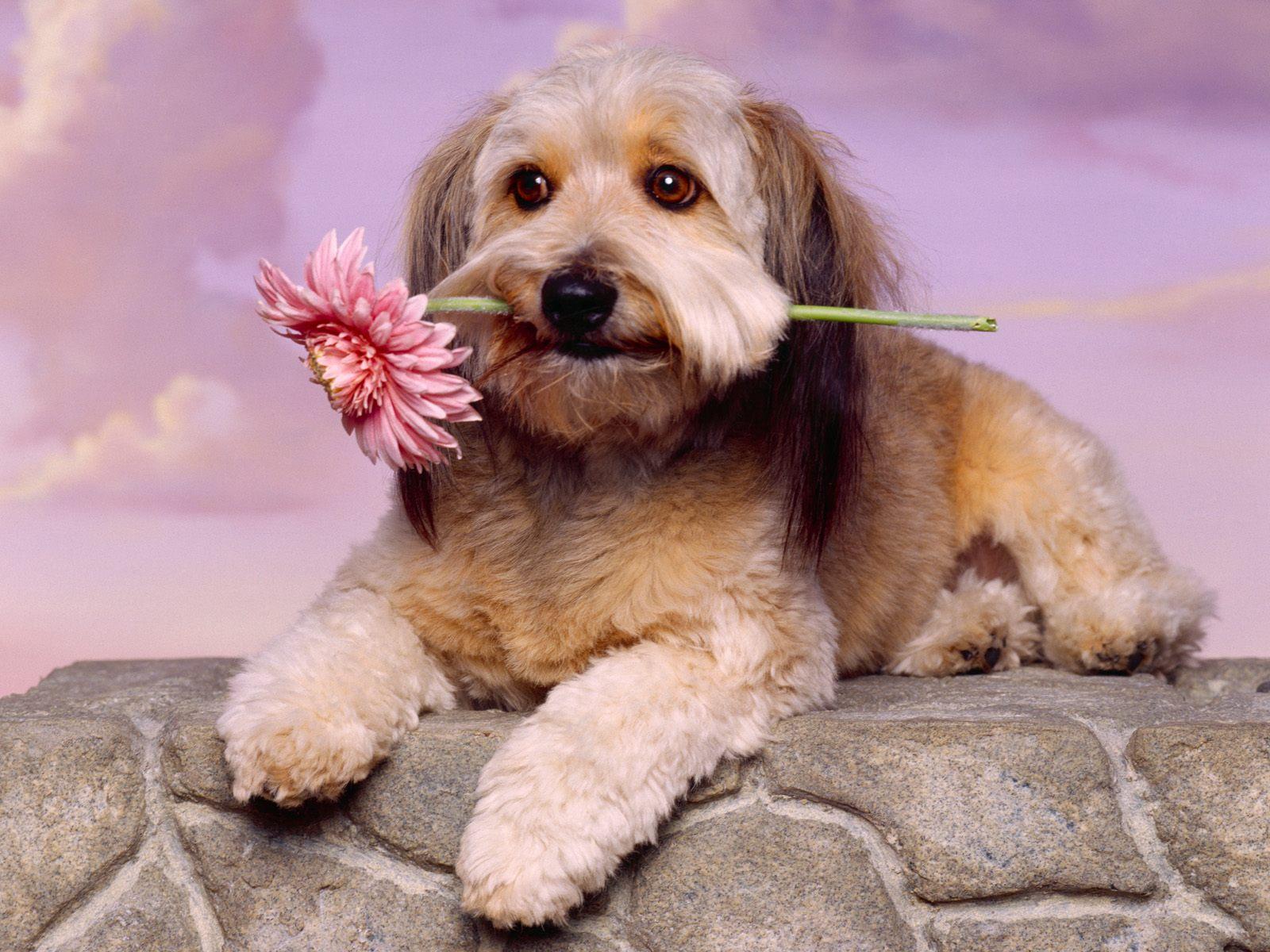 Mooie achtergrond van een hond met een bloem in zijn bek