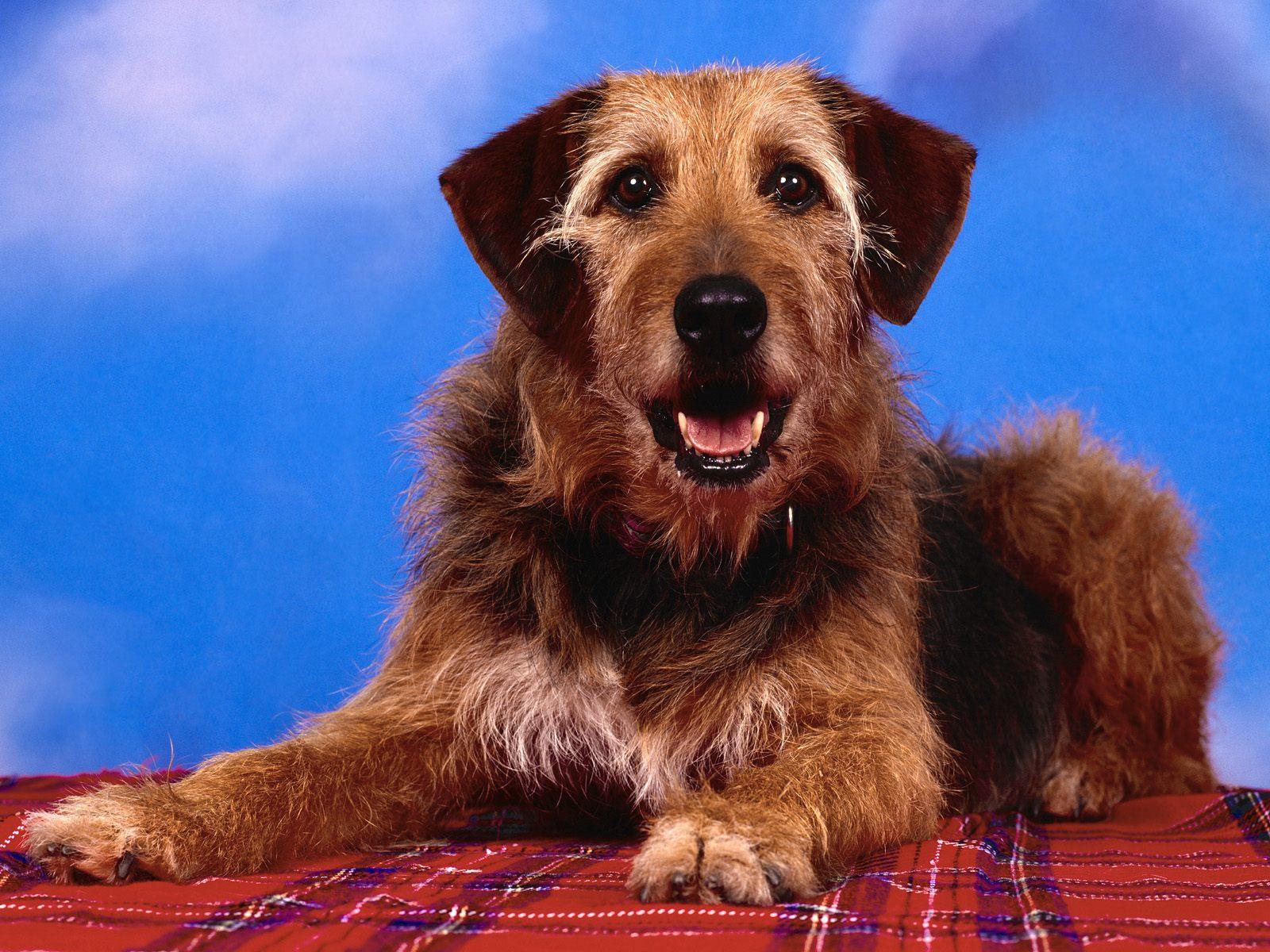 honden achtergronden hd wallpapers - photo #41