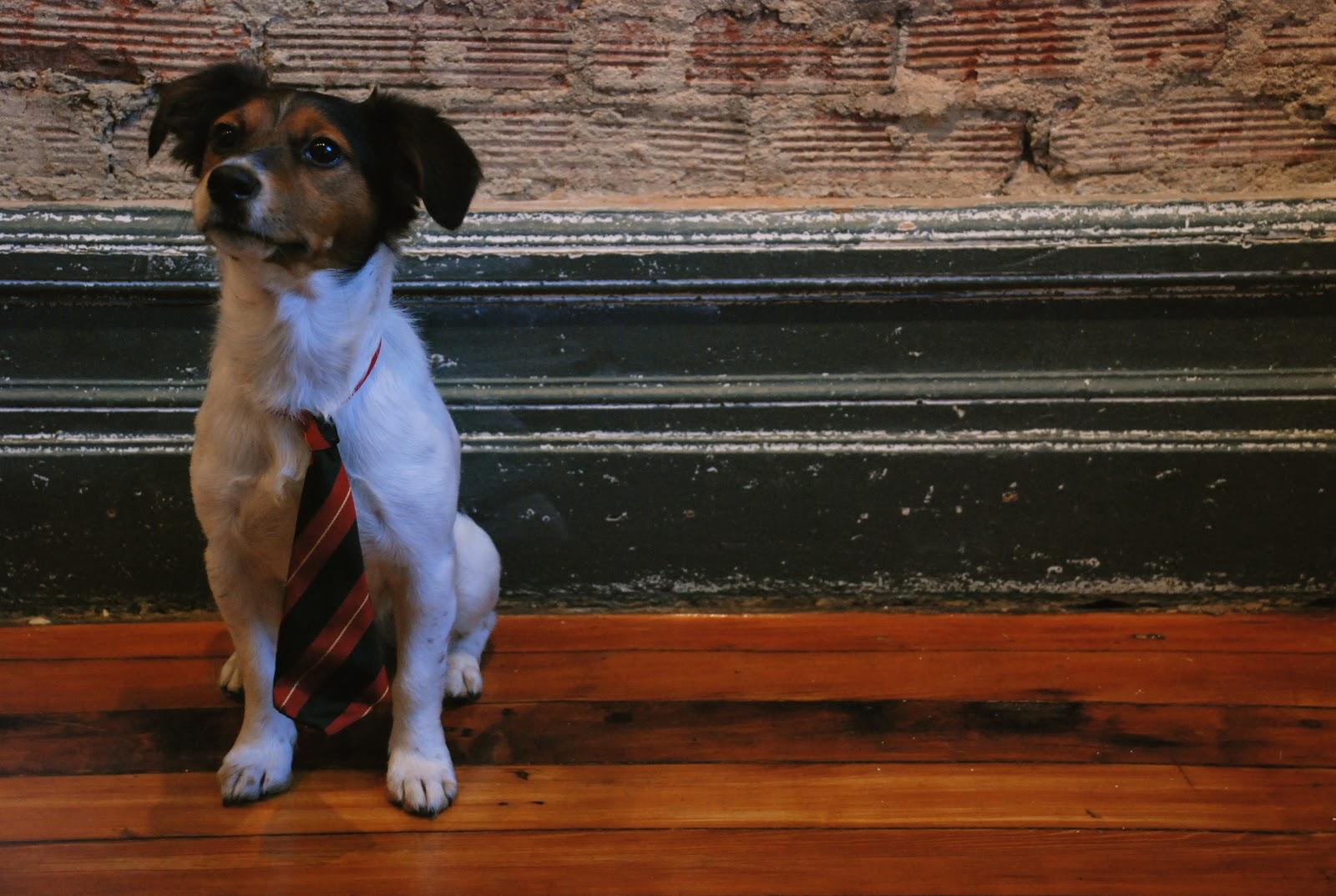 honden achtergronden hd wallpapers - photo #26