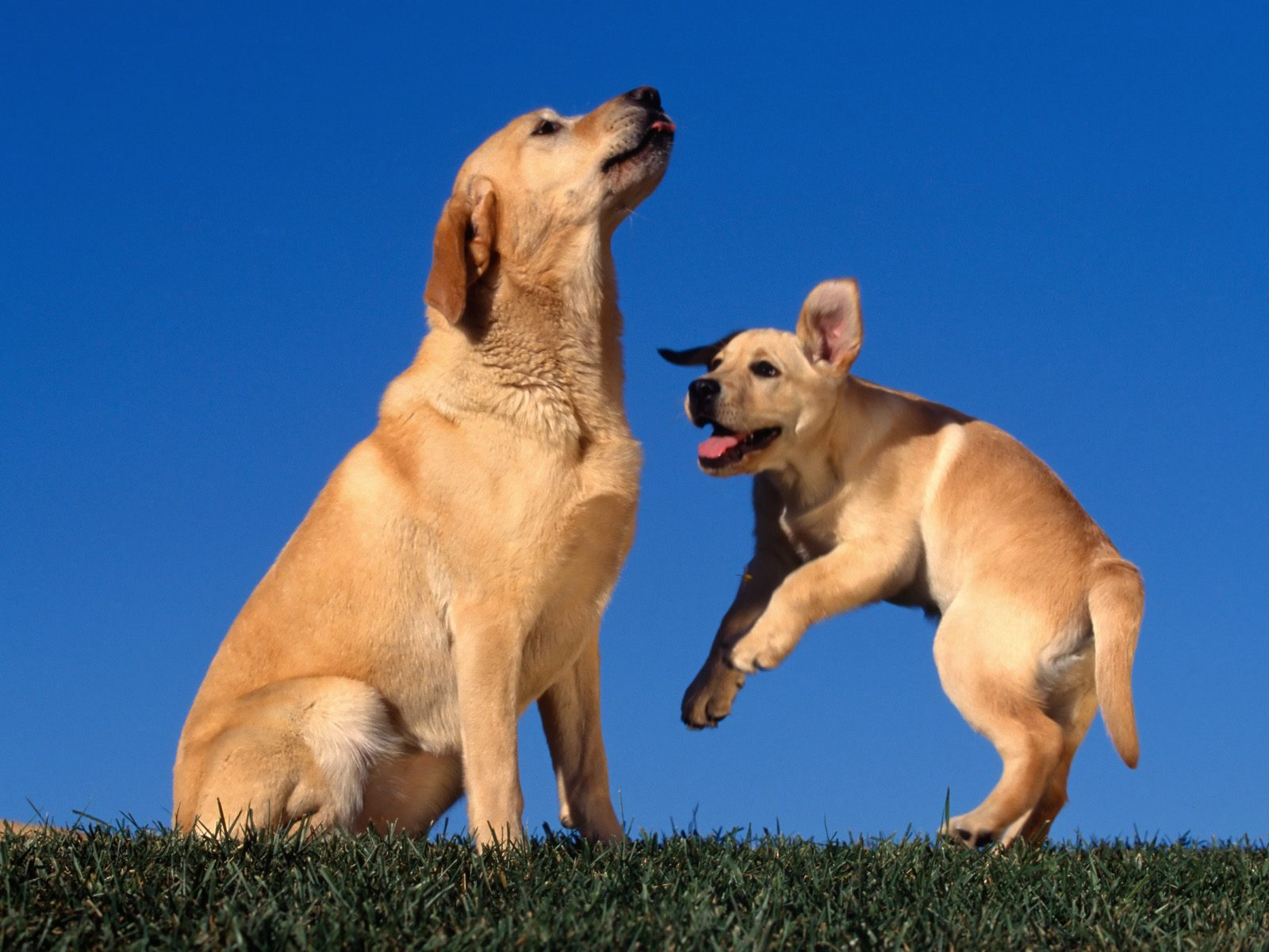 honden achtergronden hd wallpapers - photo #46