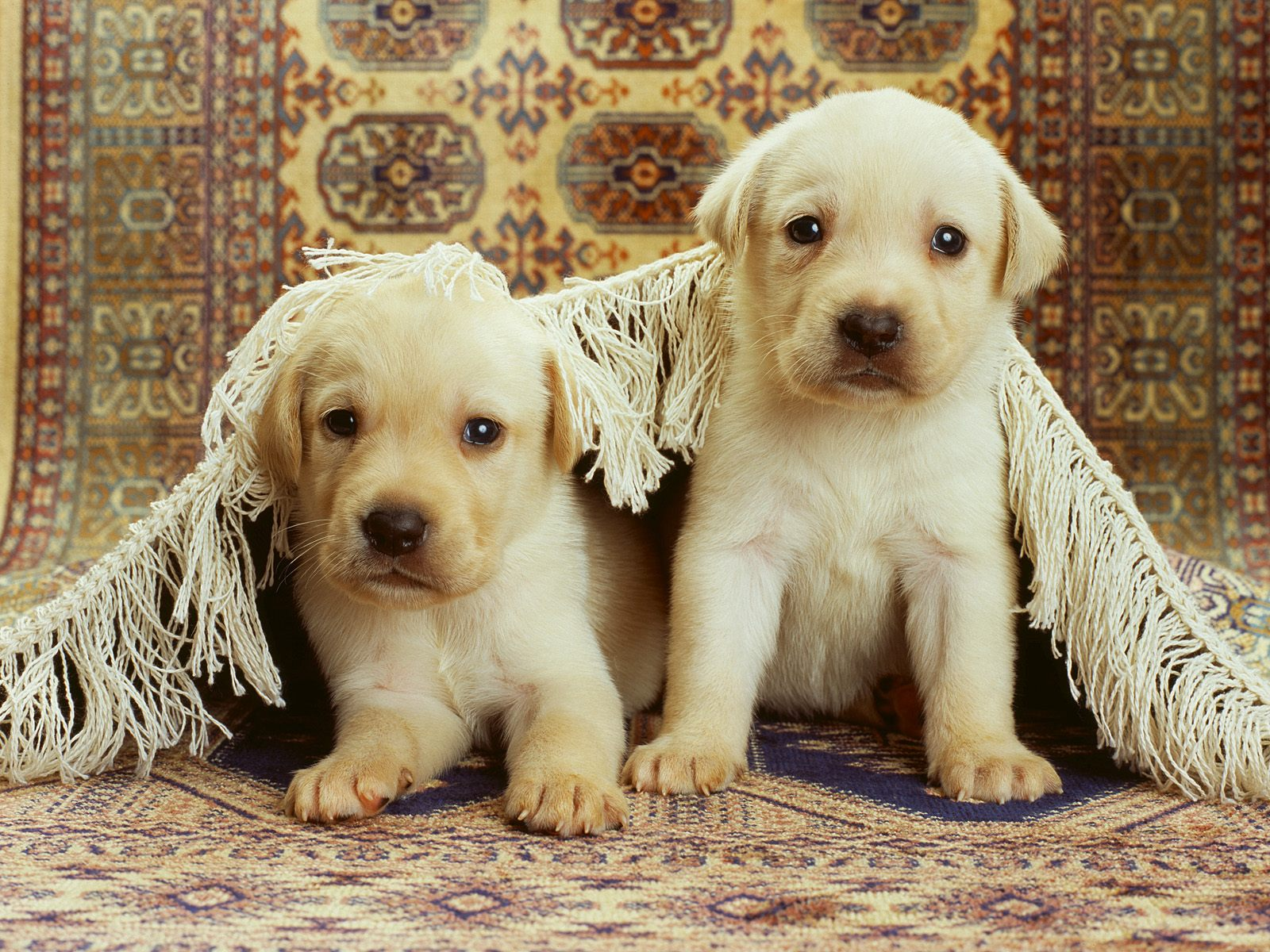 honden achtergronden hd wallpapers - photo #16