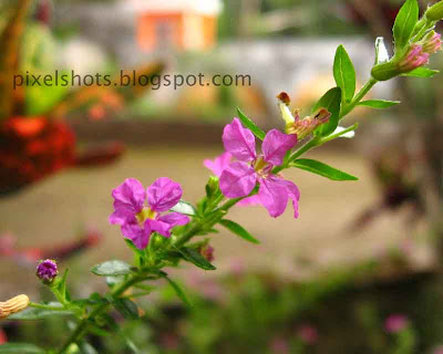 smallest-flowers,natural-bouquet-garden-plants,natural-bouquets,cannon-flower-photography,kerala-flowers,violet-flowers