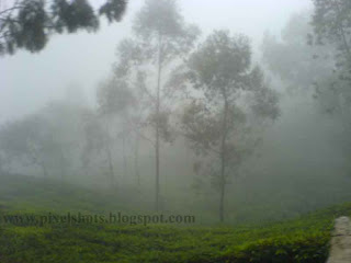 munnar pictures,mist and trees in moonar hills,mist covered tea plantations with trees in between,scenic photo from munnar tourist destination of kerala india