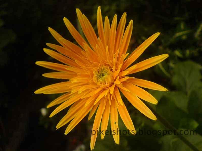 [yellow+flower.jpg]