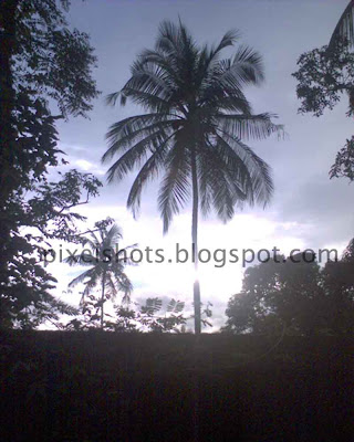 coconut trees image with bright horizon as background
