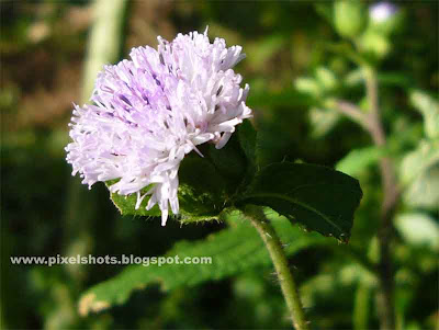 violet flower closeup picture using digital camera