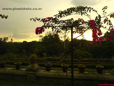 flowers from the garden of the hill palace in cochin ,photograph of bougainvillea red flowers