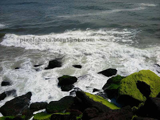 rocks in kerala beaches,green rocks in beach,ferns giving green colour to sea side rocks in varkala beach kerala
