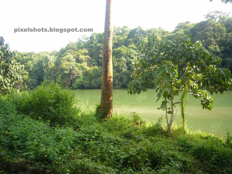 dangerous rivers of Kerala,deep rivers of kerala,kallada river thenmala,green colored forest river flowing from western ghats
