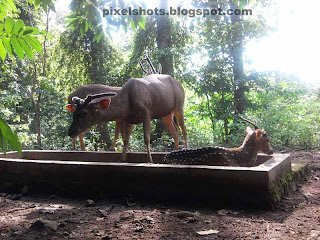 Thenmala wildlife conservation parks,eco tourism attractions of Thenmala,deer park and deers of Thenmala deer rehabilitation centre,types of deer and deer info with photos,Indian deers,kerala western ghat deer herds