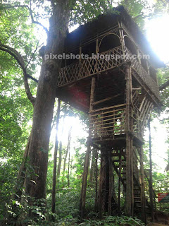 Eco tourism tree houses,Kerala Tree Houses for tourists in forests,Elevated tree house between forest trees,tree house made of bamboo ropes canes etc,bottom up view of tree house from kerala forests,Thatched tree houses of kerala standing like watch tower