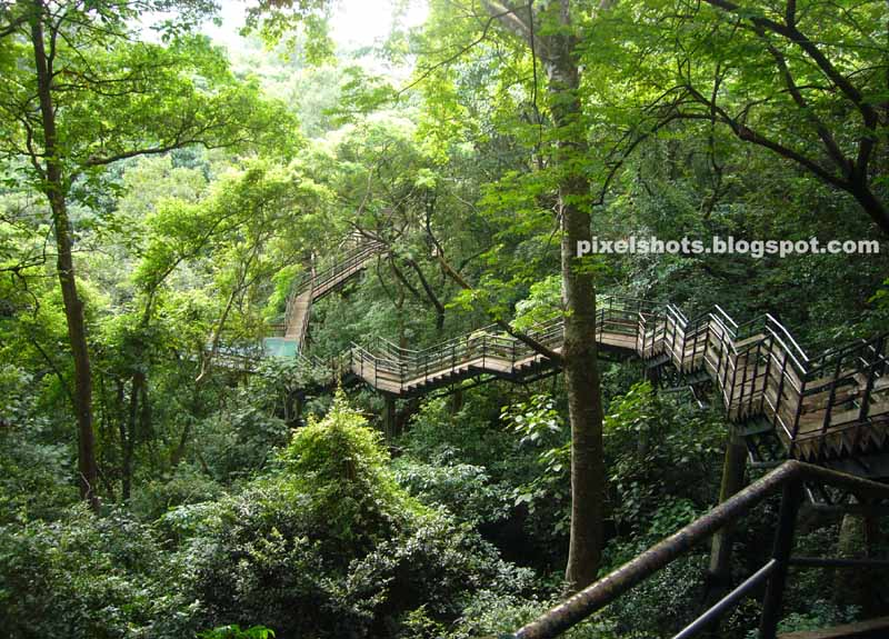 canopy walkway bridge photos,steel canopy bridge of kerala india,indian eco tours,forest trees photographed from top of canopy bridge,keralas highest and biggest forest canopy bridge