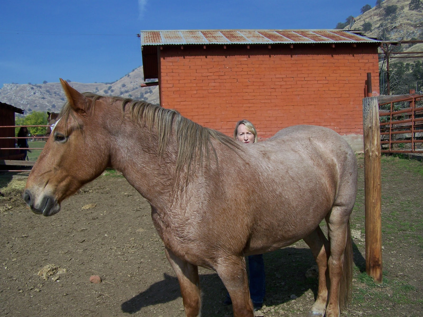 Foothill Writer: The Strawberry Roan - photo#26