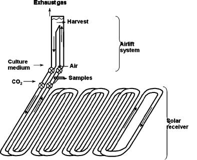 Biofuels Project 2010: Photobioreactor design