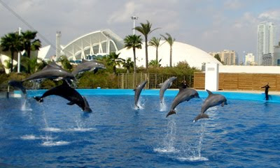 Imagenes de delfines saltando  [27-6-20]