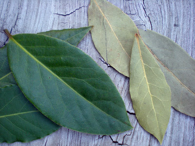 Image result for bay leaves FRESH