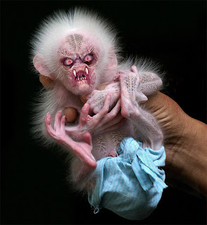 Cute Baby Monkey Pics Funny Pictures Gallery Cute Baby Monkeys Cute