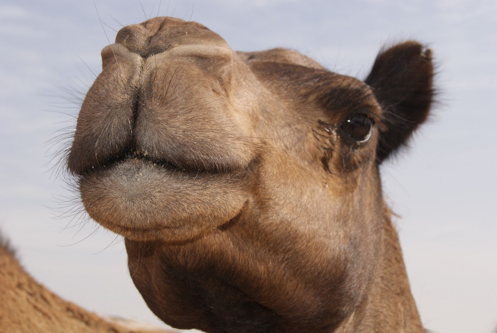 The gallery for --> Camel Eyelashes