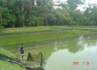 Apna gamitana for Como criar truchas en estanques
