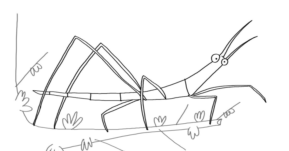 Dibujos De Insectos Para Colorear: MILÁ & TETÉ: JC: El Bicho-palo