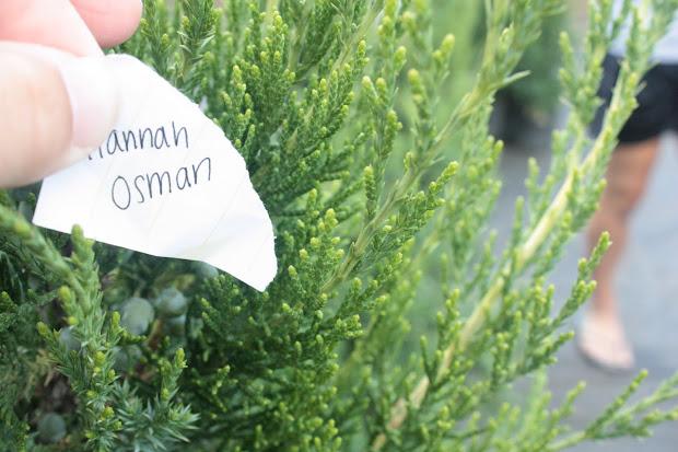 Nbc Ap Biology 10-11 Conifer Leaf