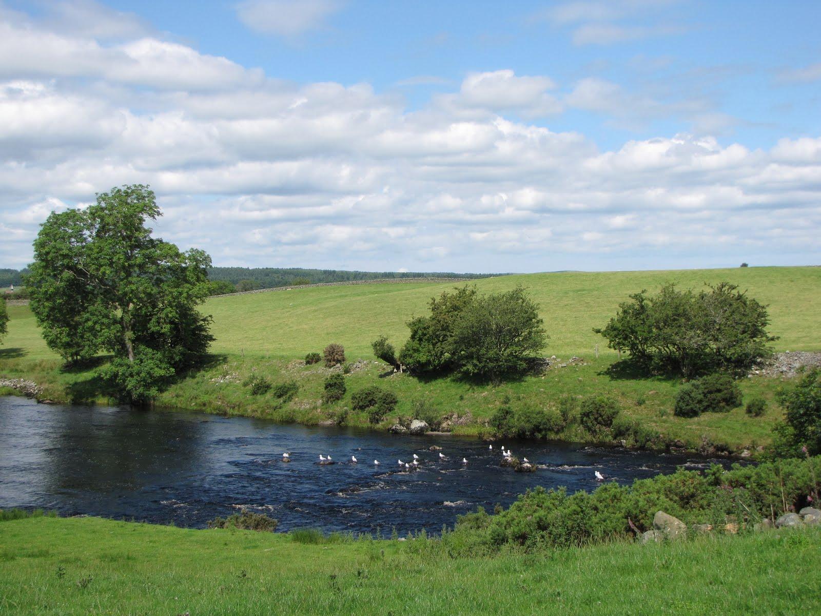 The River Cree Venue