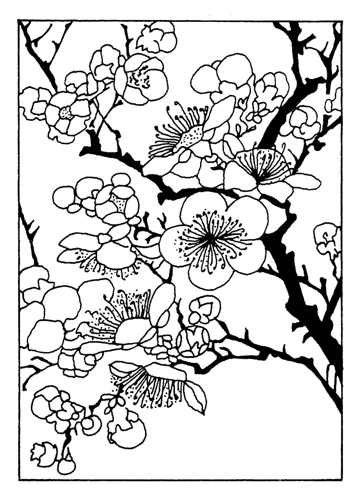 japanese cherry blossom coloring pages