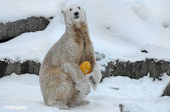 Knut & The Yellow Egg