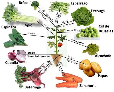 Gataladro mundertool wiki luna fandom powered by wikia for Plantas hortalizas ejemplos