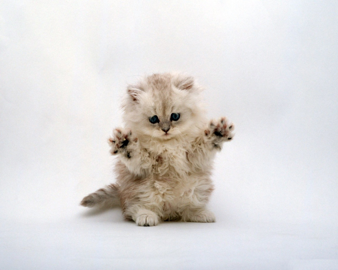 https://3.bp.blogspot.com/_SWYwL3fIkFs/S71rtc3GrvI/AAAAAAAAEG0/5rQ_osUs0Iw/s1600/cute+cat.jpg
