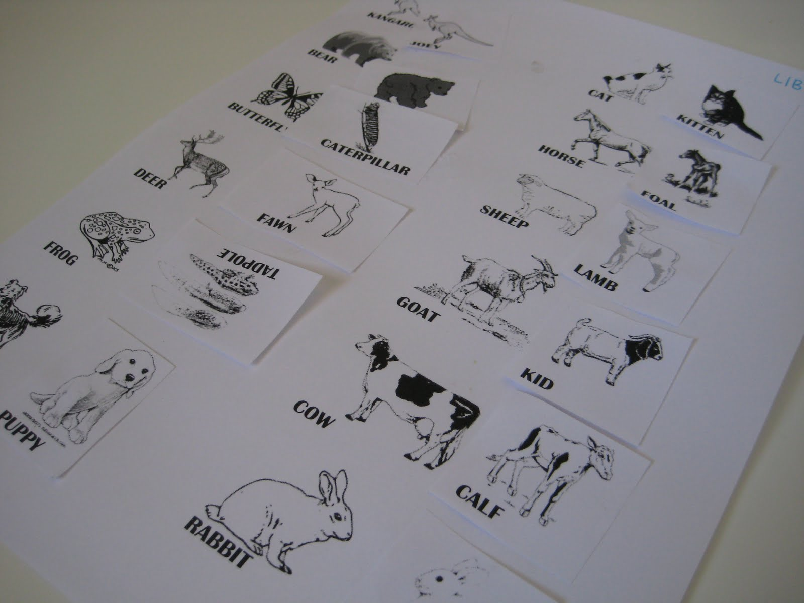 Pictures And Names Of Animals