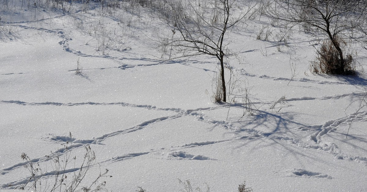 Day by Day in Fabius: Tracking the deer